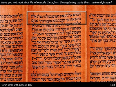 Genesis-1-cited-in-Matthew-19-Torah-Scroll