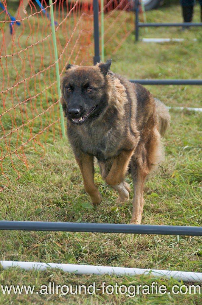Huisdierreportage Hondendag Uden Dierendag (4 oktober 2008) - 20