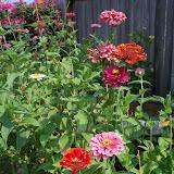 Gardening 2011 - 100_9370.JPG