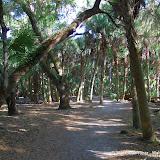 04-06-12 Myaka River State Park - IMGP9881.JPG