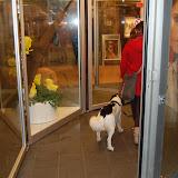 Jonge Hond centrum Emmen - 2012-04-01%2B037.JPG