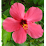 aditi sharma's profile photo