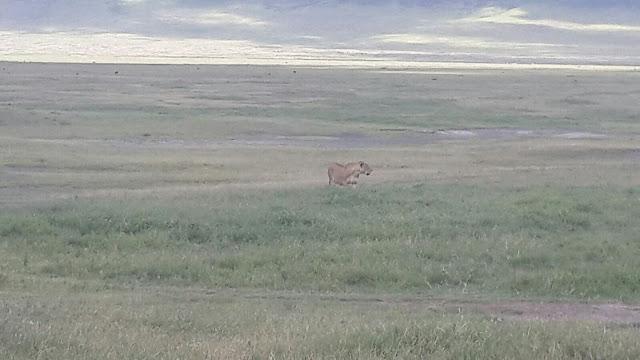 Ngorongoro Crater Tanzania, Tembea Tanzania