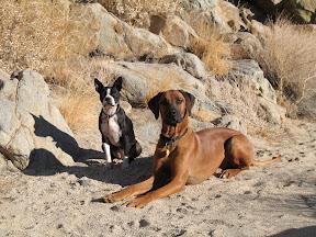 Experienced Desert dogs.