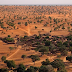 A incrível descoberta de centenas de milhões de árvores no deserto do Saara; entenda o que significa e a importância