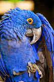 """Blue Macaw"" by Robert Dunbar -- 2nd Place Digital General B"