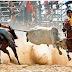 Decreto autoriza o retorno das vaquejadas e dos eventos agropecuários na Paraíba (PB)