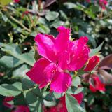 Gardening 2010, Part Two - 101_3409.JPG