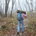 Luka nosi drva za ogrijev