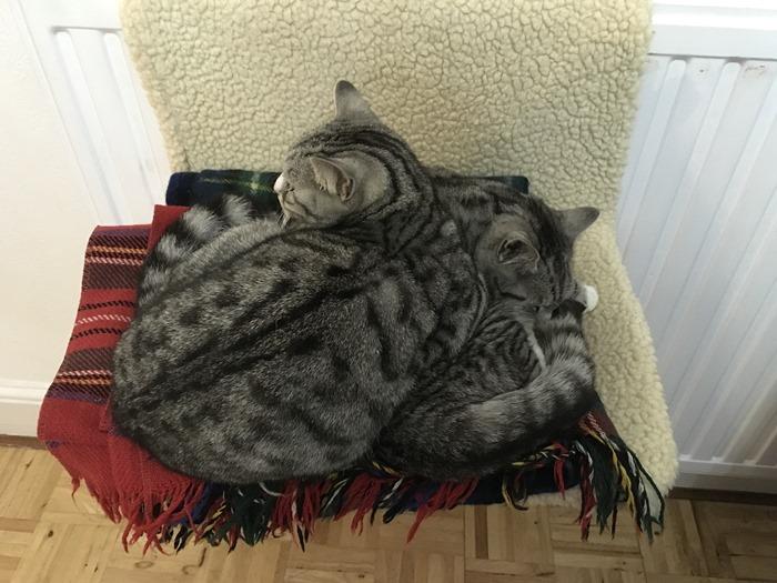 12 Ruby Sleeping on Top of Lily in Hammock 31-10-18