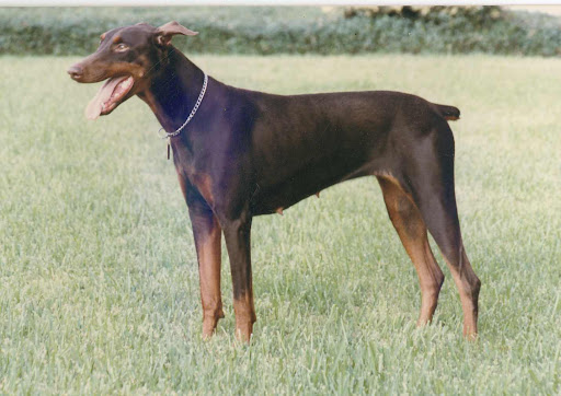 Rusty, The Wonder Dog