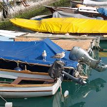 Popotniški spomladanski izlet, Istra 2007 - P0136178.JPG