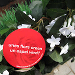 unes flors creen un espai verd_01.JPG