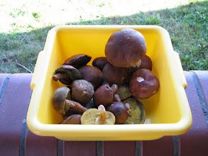 Photo: Wkład do zupy gulaszowej