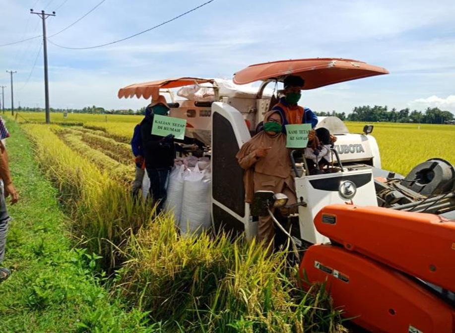 Penyuluh Pertanian Dampingi Petani Panen Ditengah Covid 19