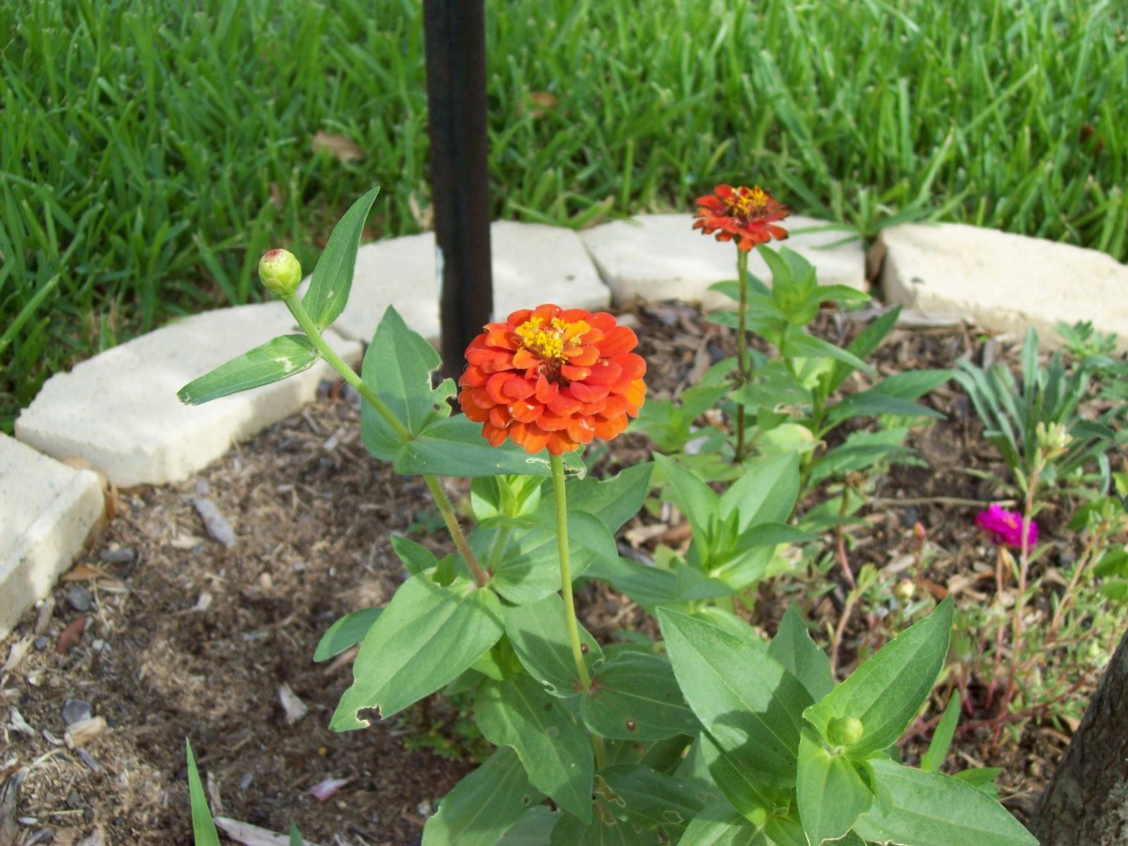 Gardening 2009 - 101_4445.JPG
