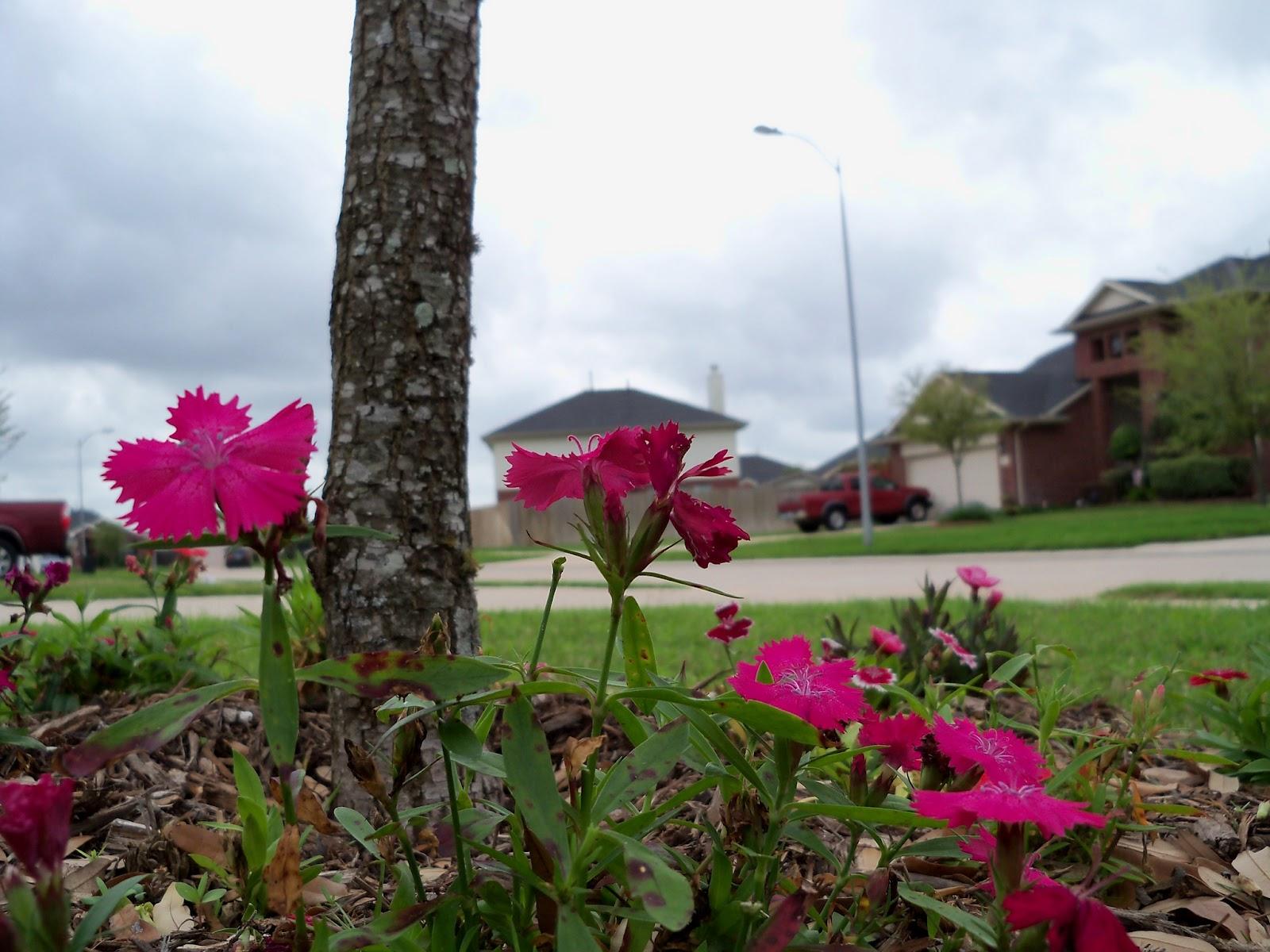 Gardening 2012 - 115_1423.JPG