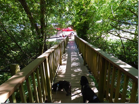 Bubba and Skruffy on Bridge over Road to Indian Creek, Indian Creek RV Park, Gold Beach, OR