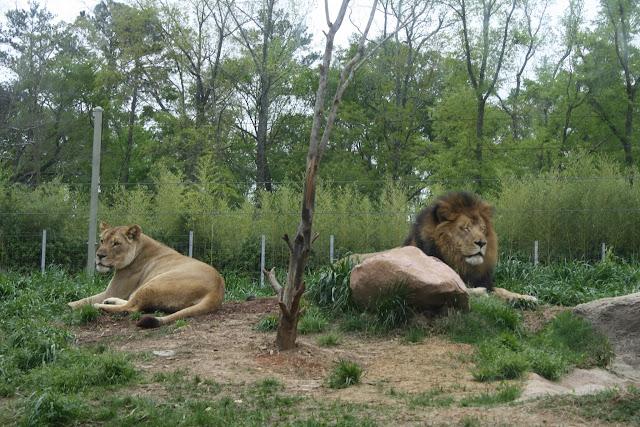 Zoo Snooze 2015 - IMG_7188.JPG