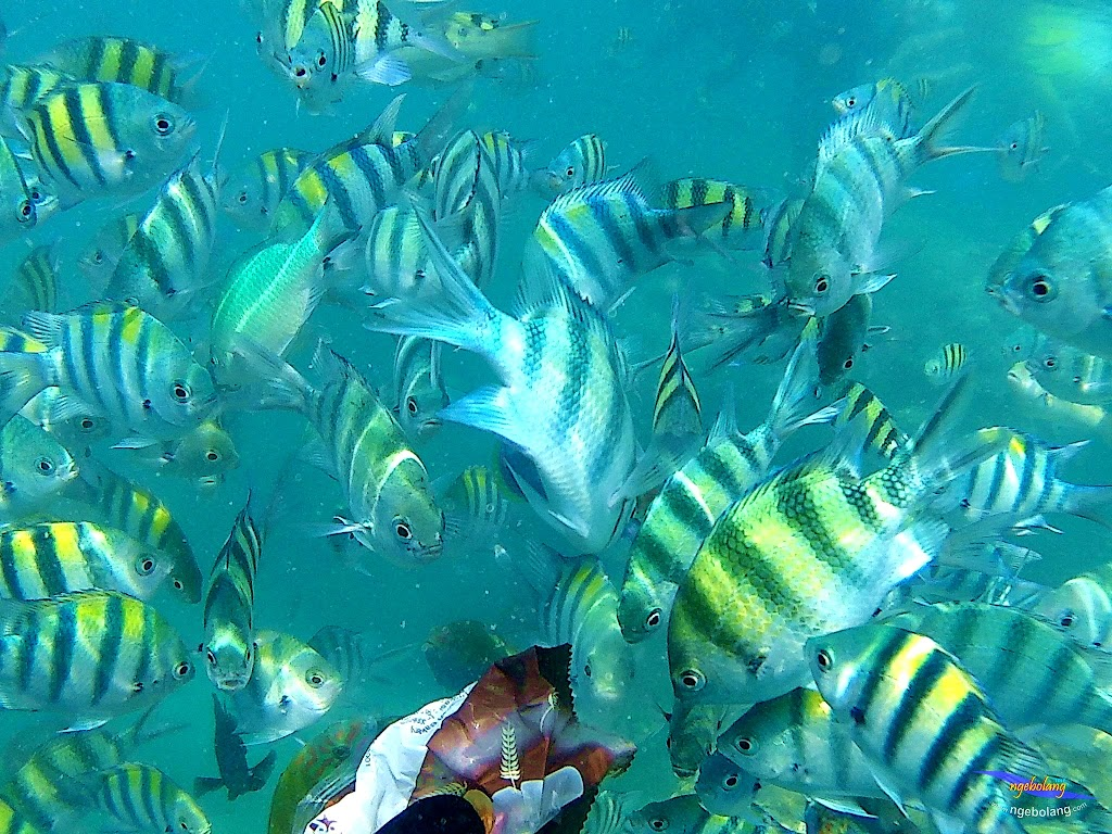 pulau harapan, 5-6 september 2015 skc 014
