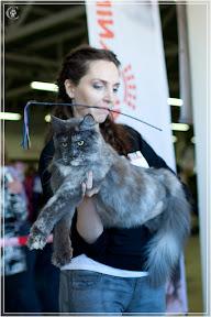 cats-show-25-03-2012-fife-spb-www.coonplanet.ru-007.jpg