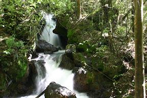 Rainforest waterfall near Ketetahi