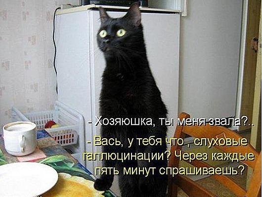 f6ecc6c957b91028a57ab61ed15_prev_thumb[5]