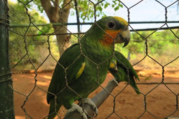 Parrot 001