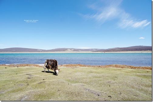 Mongolia47