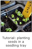 tutorial planting seeds in a seedling tray