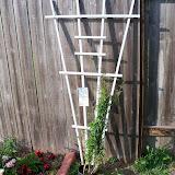 Gardening 2010 - 101_1231.JPG