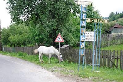 Freilaufendes Pferd in Bistricioara
