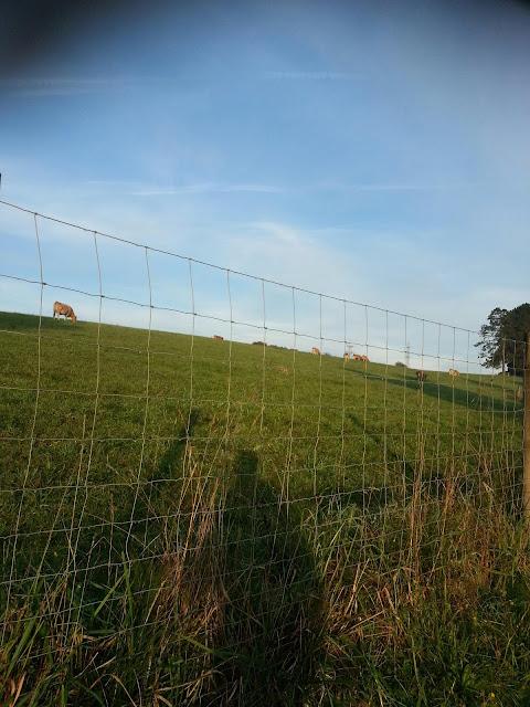 vacas pastando en una pradera