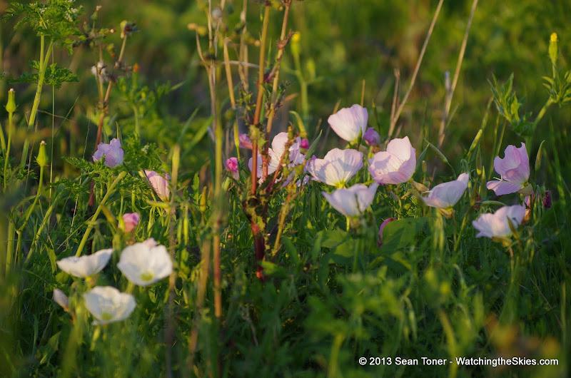 2013 Spring Flora & Fauna - IMGP6337.JPG