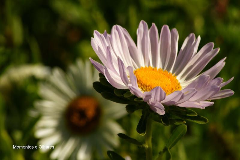 Vida de Flor, CINTHIA KRIEMLER