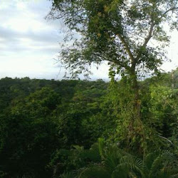 Gaia Hotel & Reserve Manuel Antonio Adults Only's profile photo
