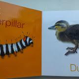 Книжка о животных для малышей - можно потрогать пух утенка