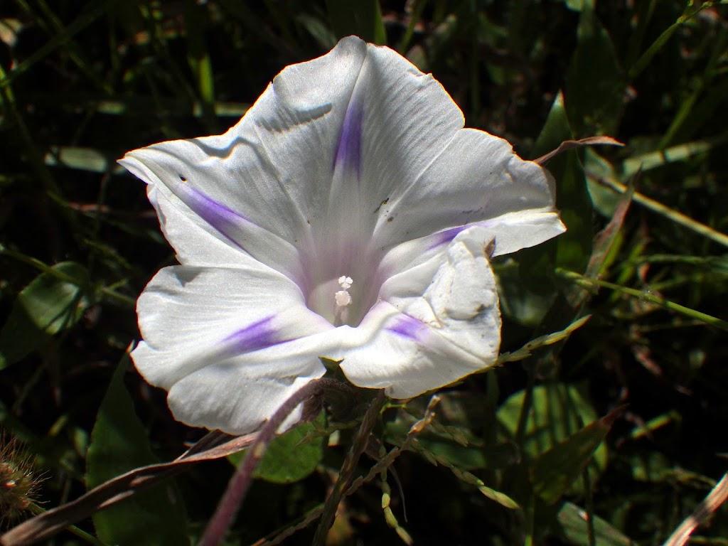 花の写真、白系