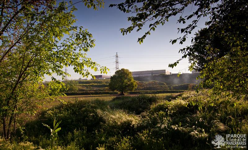 naturaleza en el parque lineal del manzanares