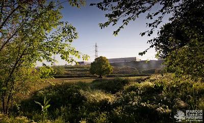 naturaleza-parque-lineal-manzanares.jpg