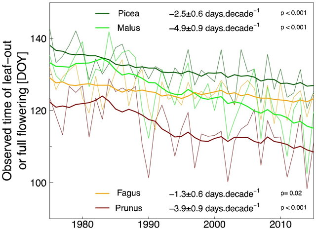 Mean date of full flowering for Malus and Prunus and of leaf-out for Fagus and Picea in Switzerland during the period 1975–2016, averaged from 8 to 11 sites, depending on species, with more than 35 years of observations. 11-year moving averages were applied and slopes of the linear regressions were reported. Graphic: Vitasse, et al., 2017 / Agricultural and Forest Meteorology