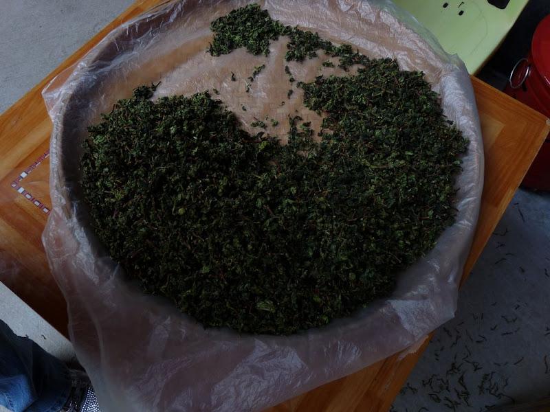 CHINE, Fujian,Xiamen et Tou lou 1 - P1010810.JPG