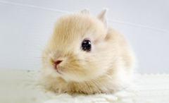 Cute-Rabbit-03 (1)