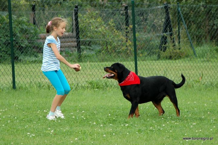 rottweiler i mała dziewczynka