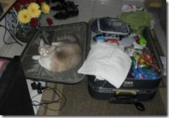 mimosa-pronta-pra-viagem