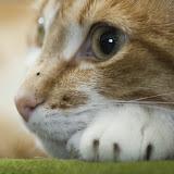animal_0023.jpg