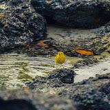 galapagos - Galapagos_FB_2-84.jpg