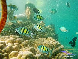 pulau harapan timur jauh 29-30 nov 2014 caklung 29