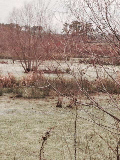 Anderson Creek Hunting Habitat - photo55.JPG