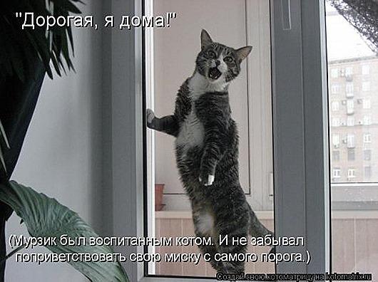 1423819014_kotomatricy-28